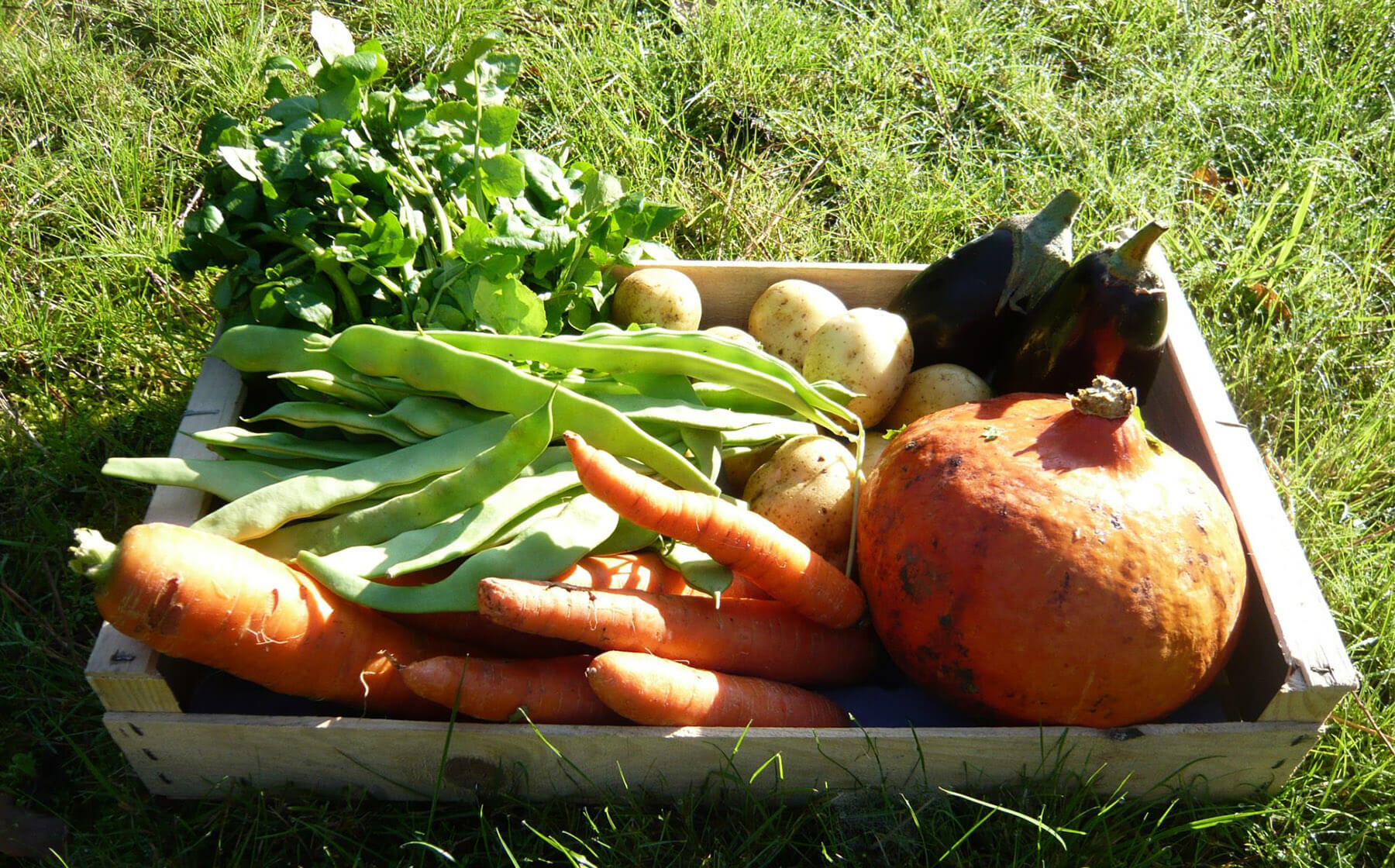 Panier bio avec des carottes, aubergines, pommes de terre, des pois et un potiron